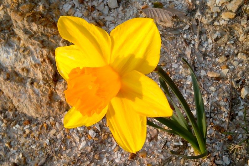Fleurs de printemps…