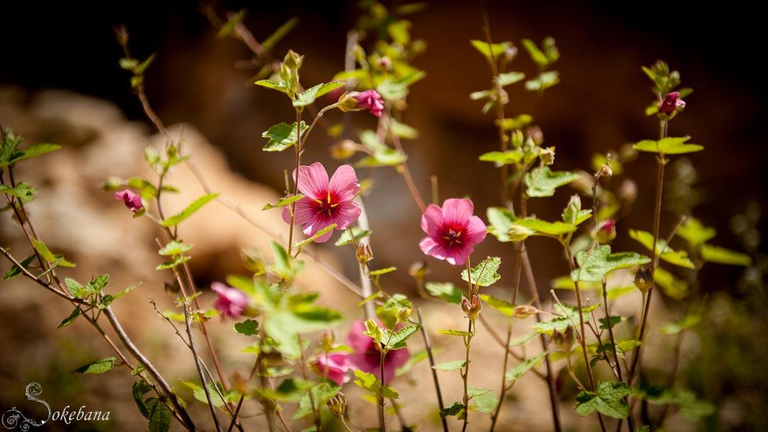 Le jardin le nid des anges for Fleurs et arbustes de jardin