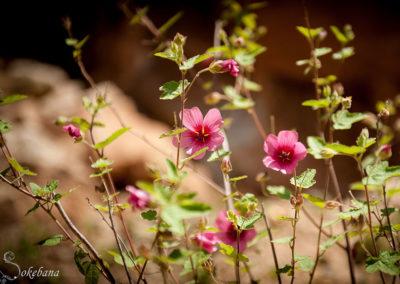 De nombreuses variétés de fleurs et arbustes autour du Nid des Anges